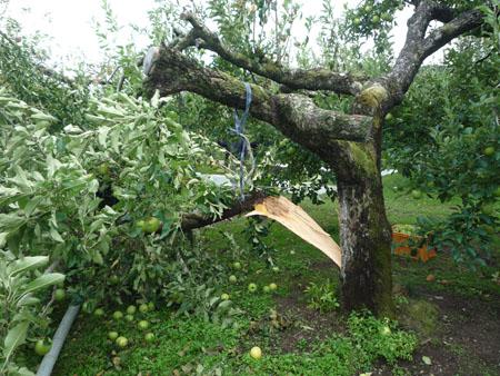 台風26号被害調査実施写真5