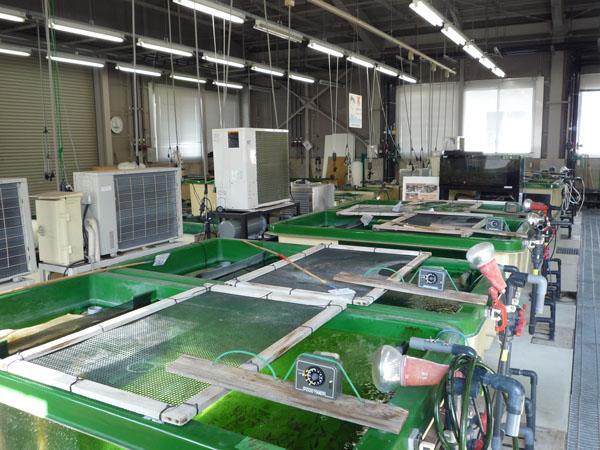 希少魚ミヤコタナゴの調査施設