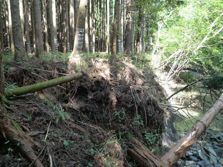 大雨により浸食された西荒川沿いの建設予定地内